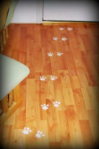 Bunny Tracks by Mommyhood to Hollywood