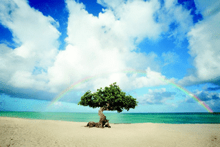 Single tree on beach with rainbow above