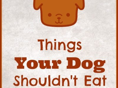 """Things your dog shouldn't eat"""