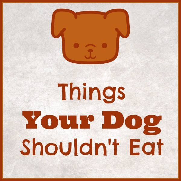 a graphic of a dog with title text reading Things Your Dog Shouldn't Eat