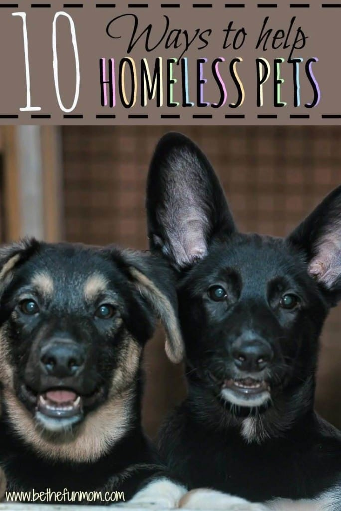 10 Ways to Help Homeless Pets from Be the Fun Mom