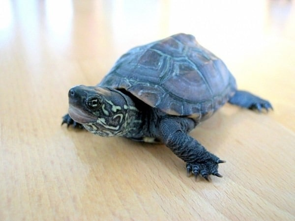 A Turtle-y Portrait