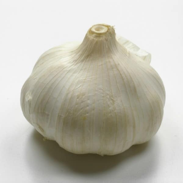 Garlic clove on a white background