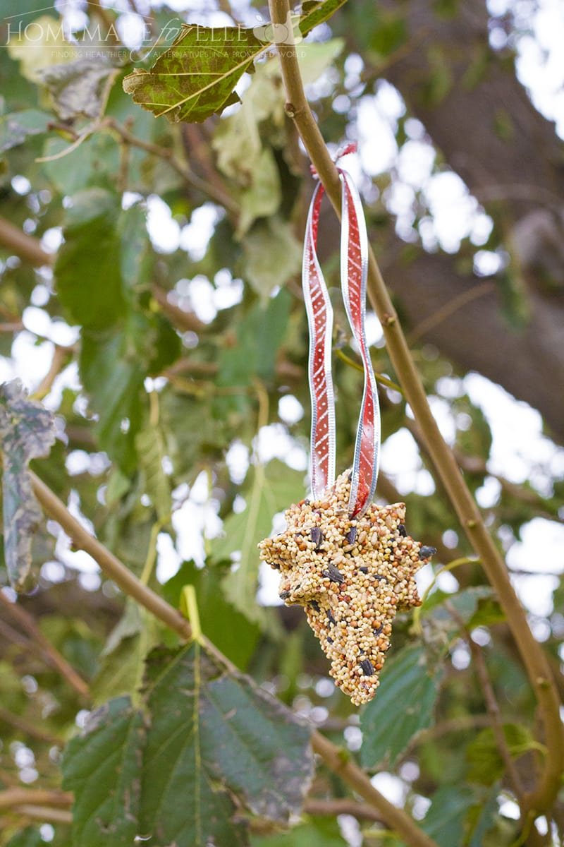 hanging-birdseed-ornament