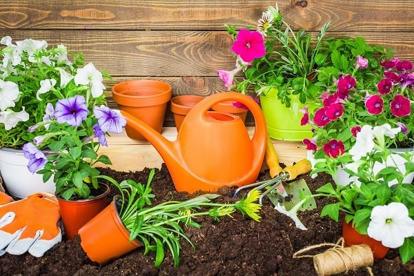 flower pots and watering cans in dirt with a wood background