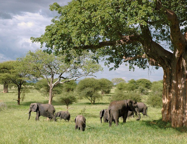Elephants at a wildlife sanctuary as a Family Outing Ideas for Summer