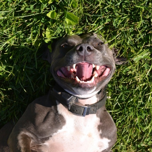 Bella loves to roll in the grass