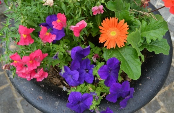 Flowers in the planter urn