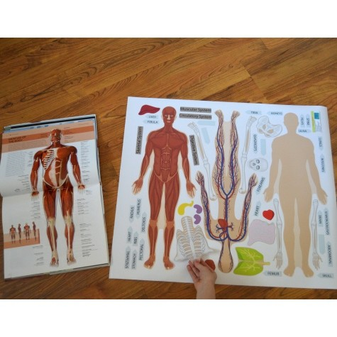 Human Body Wall Resuable Sticker Science Set