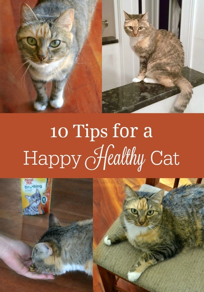 a collage of four different pictures of a cat with title text reading 10 Tips for a Happy, Healthy Cat