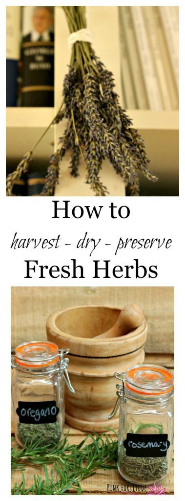 How-to-Harvest-Dry-Preserve-Fresh-Herbs