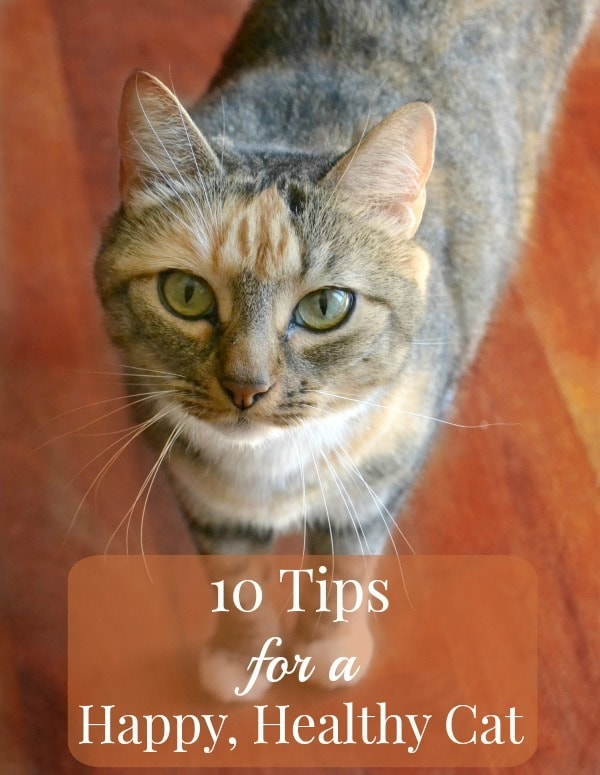 a cat on a wood floor with title text reading 10 Tips for a Happy, Healthy Cat