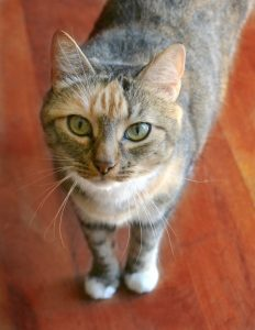10 Tips for a Happy, Healthy Cat