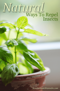 Natural Ways To Repel Insects