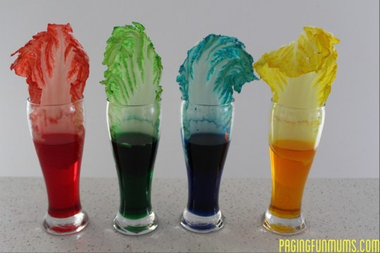four jars of colored liquid with plant leaves sticking out of them