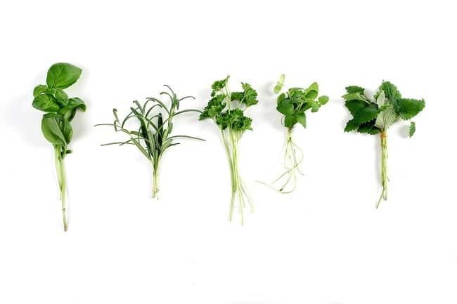 five fresh herbs on a white background