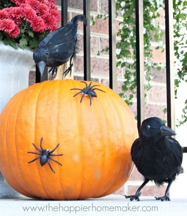 a pumpkin decorated with plastic spiders next to two fake crows on a front porch