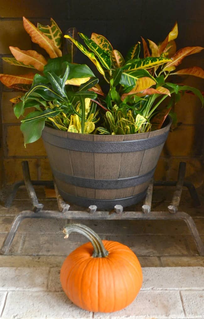 a plant in a pot on the fireplace grate next to a pumpkin
