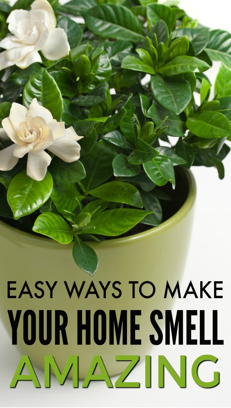 How to make your house smell good for What makes house smell good