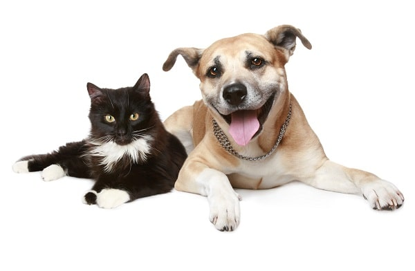 a cat and a dog sitting down on a white background