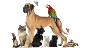 Essential Oils and Pets: What You Need to Know