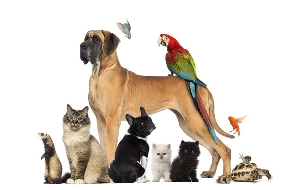 cats, dogs birds, a snail and a turtle on a white background