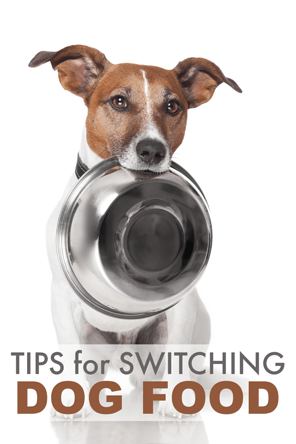 a dog holding a metal dog dish in its mouth on a white background with title text reading Tips for Switching Dog Food