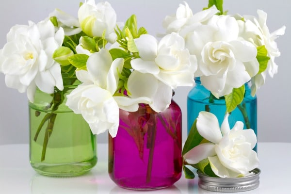 mason jars tinted green, pink and blue, filled with white flowers on a white background