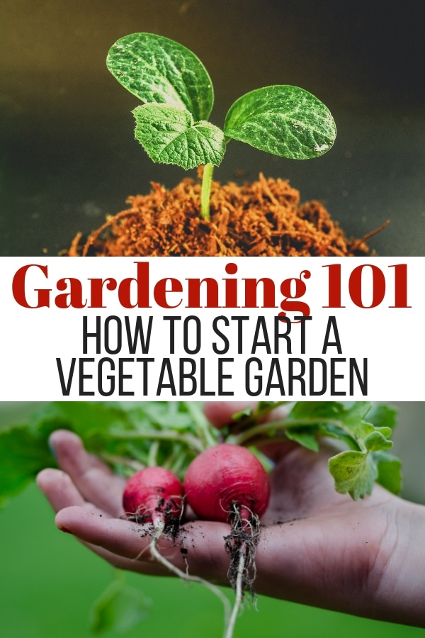 If you're looking for how to start a vegetable garden, you're in luck! These simple tips will have you growing your own food in no time at all! #gardening #tips #vegetable #greenthumb  via @wondermomwannab