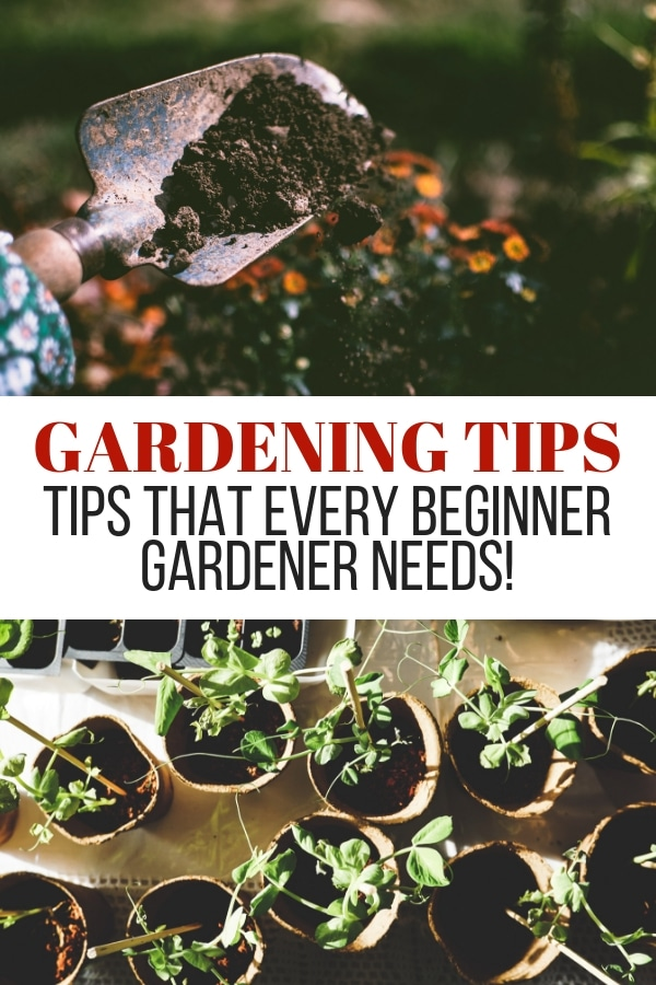These gardening tips are perfect for beginners! If you're wanting to start your very first garden spot, you don't want to miss these tips! #garden #gardening #gardeningtips  via @wondermomwannab