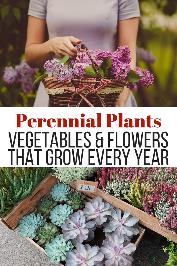 flower basket and planted flowers with text perennial plants vegetables and flowers that grow every year