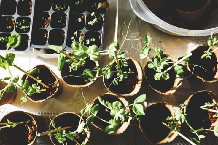 plants in various pots on an off white cloth