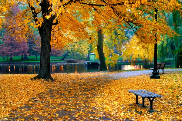 a tree with orange and yellow leaves with a lake and more trees in the background and a bench in the foreground