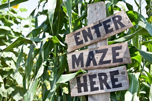 a wooden sign that says Enter Maze Here among stalks of corn