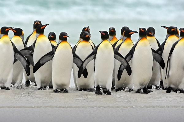 penguins standing on ice