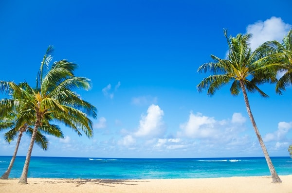 a beach with sand, the ocean, palm trees, and a blue sky