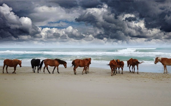horses on a beach with the ocean and dark clouds in the background